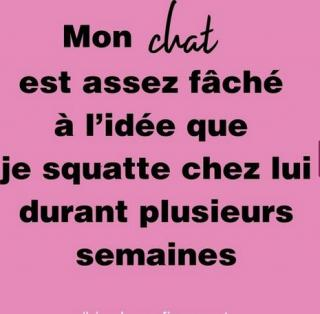 Chats alors !!! - Page 2 Chat-572df2a