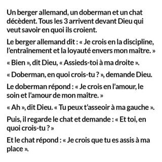 Chats alors !!! - Page 2 Chat-3-5704c2c