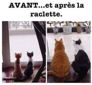 Chats alors !!! Raclette-56f88a2